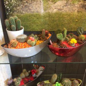 jardin de cactus 38 €