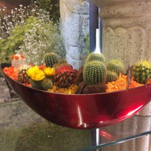 jardin de cactus rouge